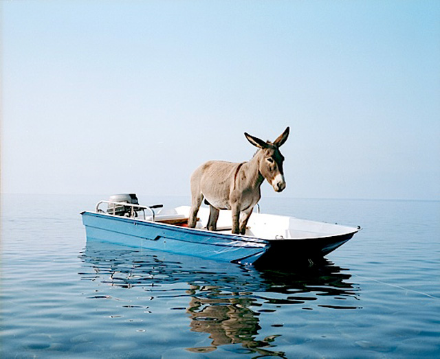 Donkey in a dinghy