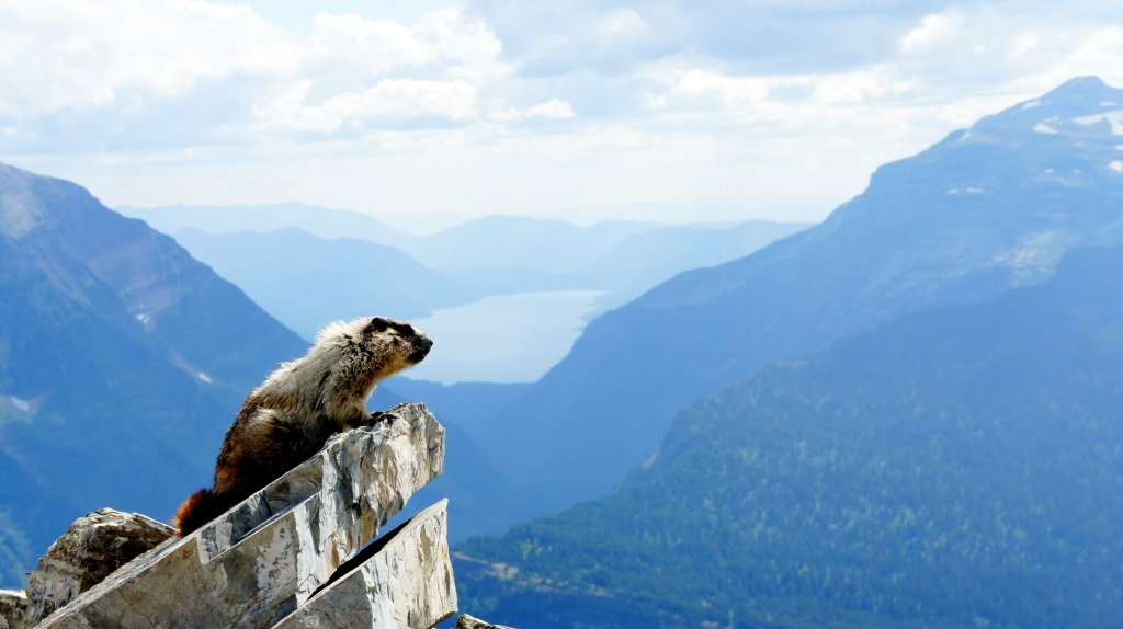 One of the cutest furry critters, a marmot, I met on the trip! We were sitting on a saddle for a break enjoying this view of the marmot and Lake McDonald!