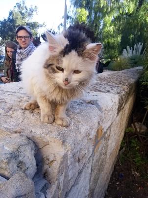 Israel Feline!