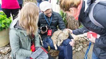 Another affectionate Israeli feline