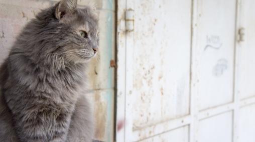 He was the most handsome feline I met.
