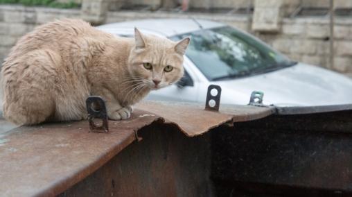 Israeli feline!